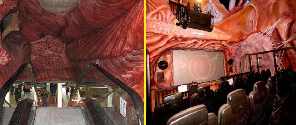 سفر به داخل آناتومی بدن انسان با موزه کورپوس