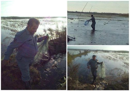 جمع آوری ۳۰ رشته دامهای هوایی غیر مجاز در سه شهر مازندران