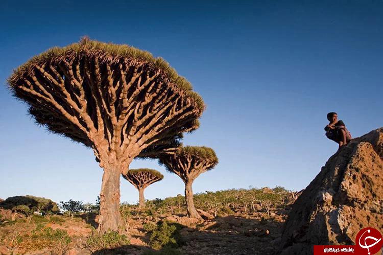 آیا درختان این جزیره مرموز واقعا فضایی هستند؟