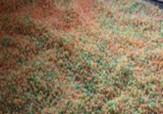 باشگاه خبرنگاران -پلمپ کارگاه غیر مجاز تولید نبات و آبنبات غیربهداشتی در شهرستان ورامین