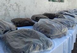 ۱۴ و نیم تن مواد مخدر در استان بوشهر کشف شد