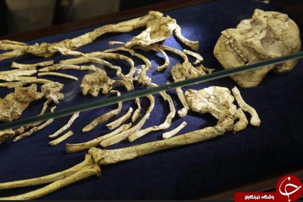 رونمایی از اسکلت ۳.۶ میلیون ساله انسان