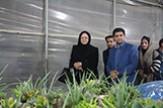 باشگاه خبرنگاران -بازار گل و گیاه اصفهان رسالت خود را به خوبی انجام داده است