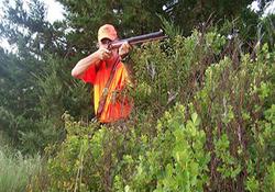 قطع یک درخت تنومند با شلیک گلوله + فیلم