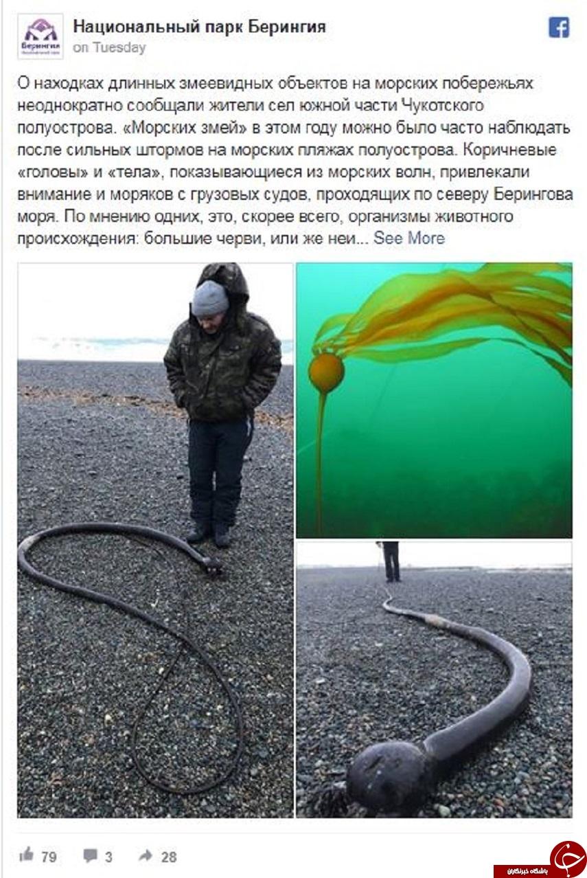 میهمان ناخوانده عجیب و مرموزی که از اعماق دریا به ساحل آمد+عکس