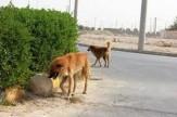 باشگاه خبرنگاران -سگ های ولگرد و تهدید سلامت شهروندان اهوازی