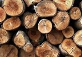 باشگاه خبرنگاران -کشف بیش از ۱۰ تن چوب درختان مرغوب