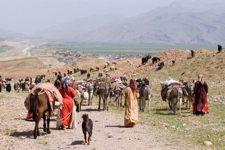 باشگاه خبرنگاران -داغ بودن بازار عشایر در استان ایلام + فیلم