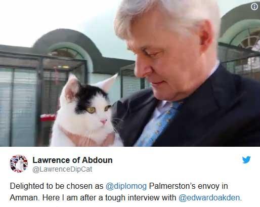 استخدام یک گربه به عنوان کارمند جدید سفارت بریتانیا در اردن+عکس