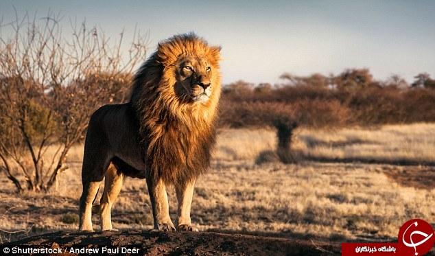کدام حیوانات بدترین مرگ و میر را ایجاد می کنند +عکس