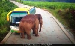 ویدئویی جالب از حمله فیل خشمگین به اتوبوس!