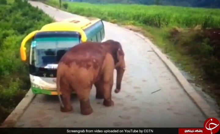 لحظه حمله فیل خشمگین به یک اتوبوس ! فیلم//////////////////////////////