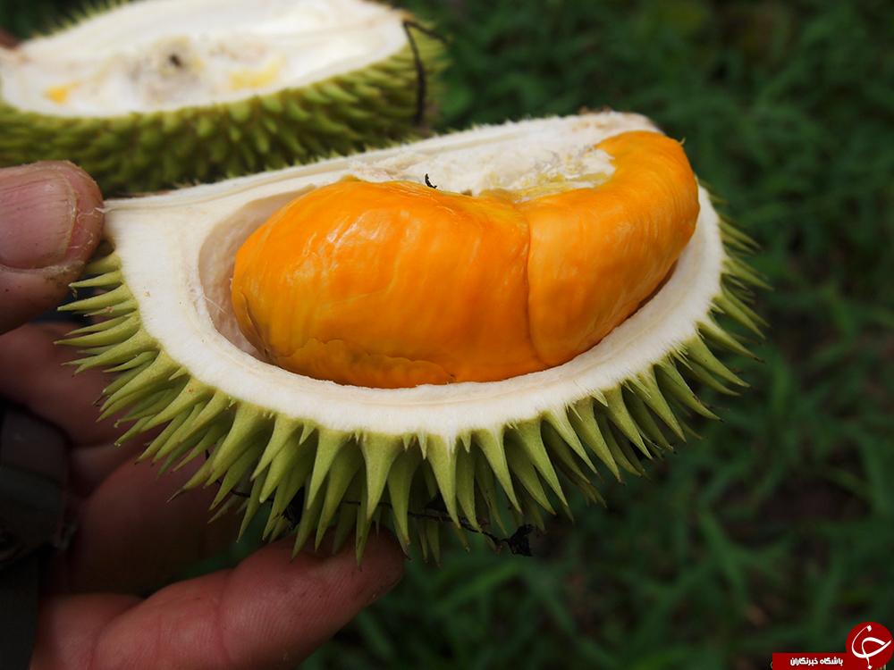 میوه ای با طعم بهشت و رایحه جهنم/پرطرفدارترین کالا بعد از آیفون x در چین+عکس