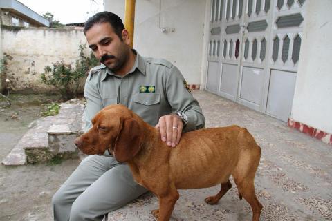 باشگاه خبرنگاران -محیط زیست رامهرمز ناجی یک قلاده سگ گرفتار از درون کانال