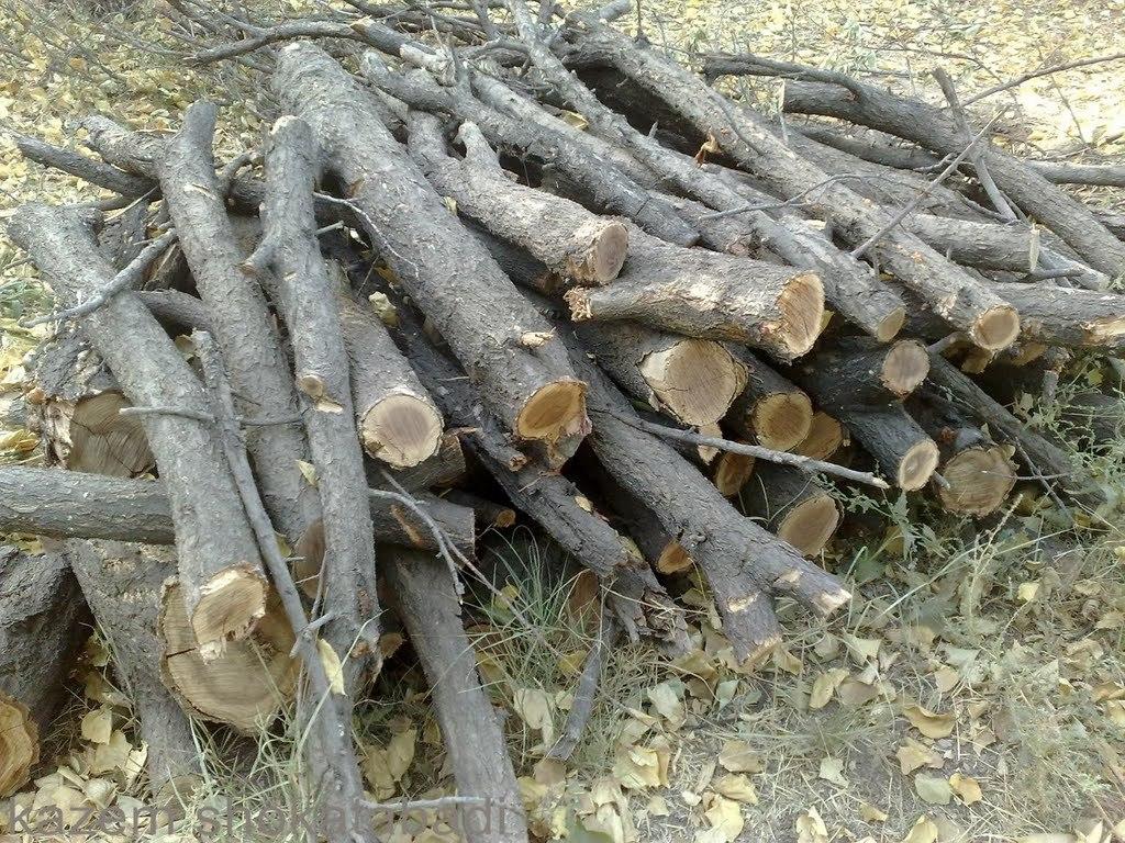 باشگاه خبرنگاران -تبدیل شدن تمام منابع جنگلی به هیزم به دلیل کمبود نفت + فیلم