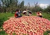 باشگاه خبرنگاران -خرید تضمینی بیش از ۴۰ هزار تن سیب صنعتی از باغداران در آذربایجان غربی