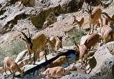 باشگاه خبرنگاران -آغاز سرشماری پستانداران در منطقه شکار ممنوع کوثر