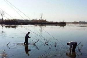 جمعآوری 200 رشته دام هوایی در لاهیجان