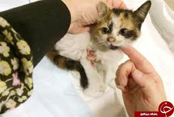 ورود گربه های ولگرد به زندگی دختران جوان عربستانی/ موج جدید غربزدگی در پی آزادی زنان در عربستان + تصاویر