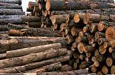 باشگاه خبرنگاران -کشف ۵ تن چوب جنگلی قاچاق