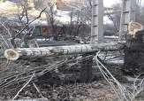 باشگاه خبرنگاران -قلع و قمع درختان جنگلی در محور کندوان + تصاویر