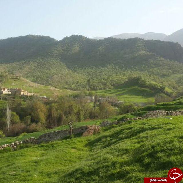 """طبیعت زیبا و سرسبز روستای """"کلم"""" + تصاویر"""