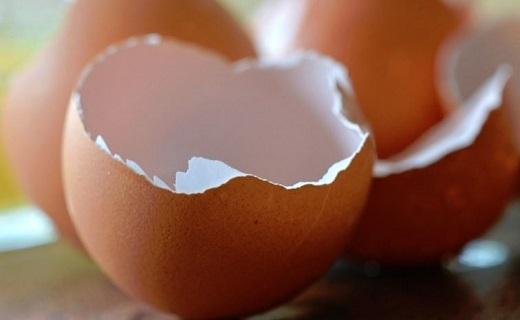 پوست تخم مرغ را دور نریزید/ راهکار طب سنتی برای فرار از فراموشی/ محافظت از چشم با چای داغ/ داشتن پوستی شاداب با این خوراکی خوشمزه