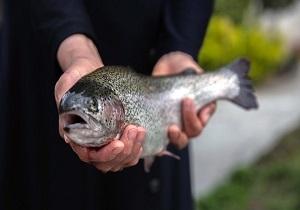 پرورش ماهی در اردبیل از تلاش برای گرفتن وام تا مشکلات بیمه