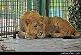 باشگاه خبرنگاران - دادستانی مخالف تعطیلی باغوحش مشهد است