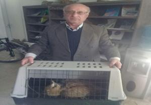باشگاه خبرنگاران -تحویل یک قطعه پرنده بوتیمارزخمی به اداره حفاظت محیط زیست آمل