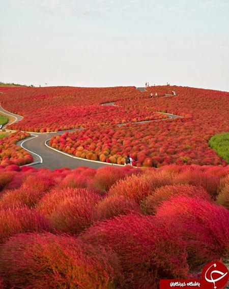 رویایی ترین جاده های دنیا را ببینید+ تصاویر