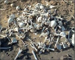 عجیبترین و جدیدترین روش دفن اجساد در انگلیس!