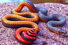 نایابترین گونه های حیات وحش با رنگهای باور نکردنی+تصاویر