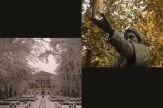 «قصه پاییز و زمستان در موزه سینما» روی دیوار میرود