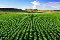 توسعه کشت فراسرزمینی، مرهمی بر عطش بحران منابع آبی
