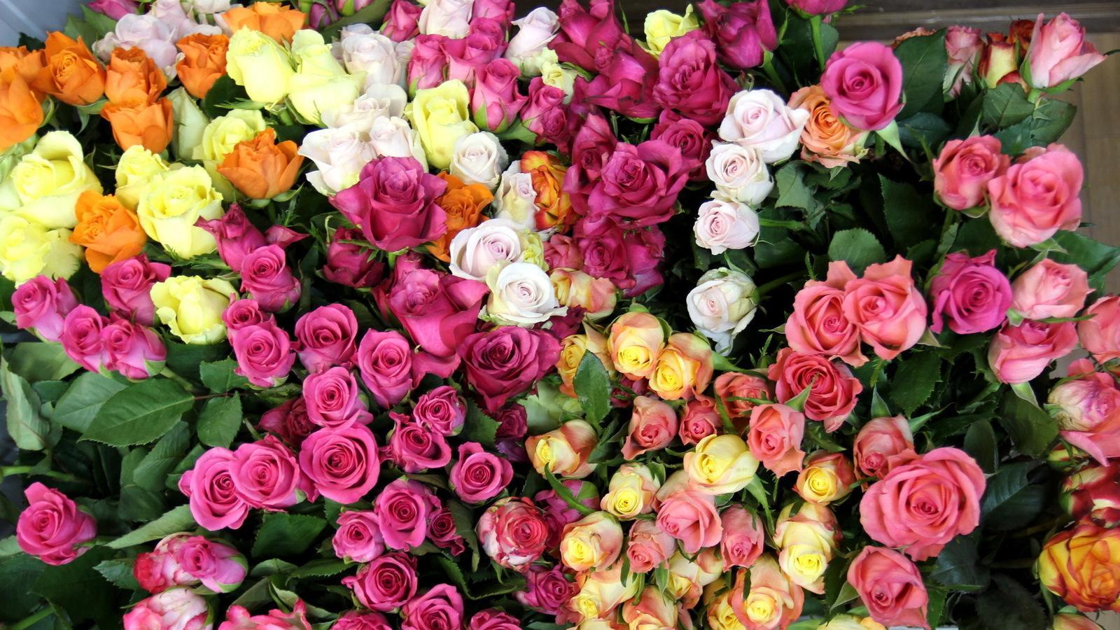 پیام صوتی تولد باشگاه خبرنگاران جوان - والپیپرهایی زیبا از گلهای عاشقانه ...