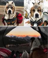 باشگاه خبرنگاران -سگ و گربه مشهور فضای مجازی +تصاویر