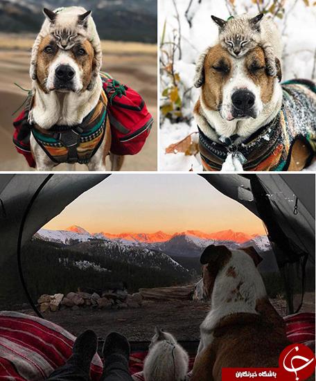 سگ و گربه مشهور فضای مجازی +تصاویر