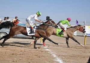 بیست و سومین مرحله پیکارهای زیبایی اسب اصیل ایران در اردکان درحال برپایی است