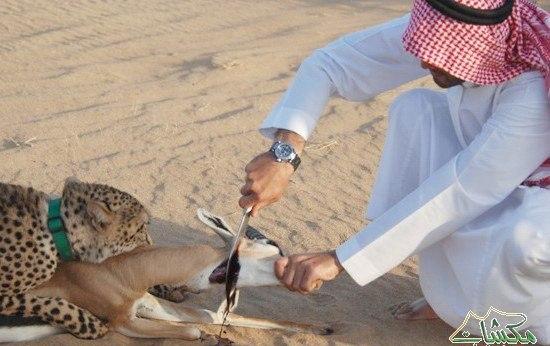 تفریحات عجیب و غریب جوانان سعودی+ تصاویر
