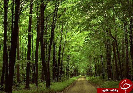 بیش از ۴۰۰ هکتار تخریب جنگل / طبیعتی که متعلق به تمام نسل هاست