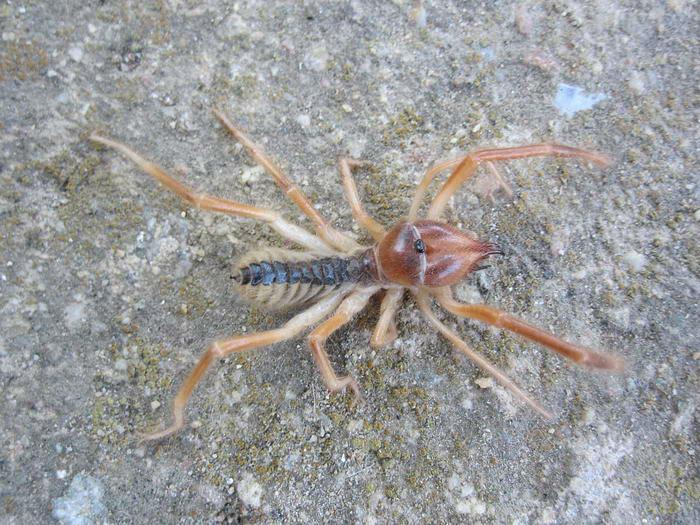 10 گونه از سمی ترین و خطرناک ترین عنکبوت های جهان