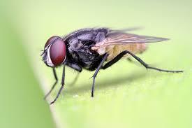 جلب حشرات موذی با کمک مهندسی معکوس