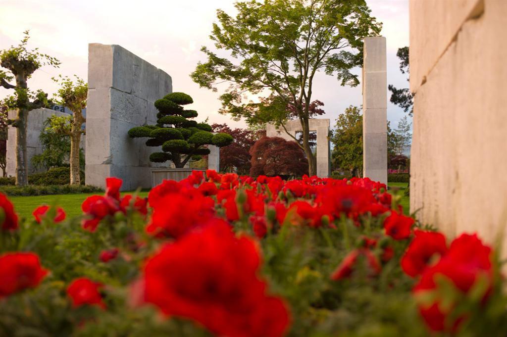 موزه درخت؛ محلی برای رشد درختان کهنسال