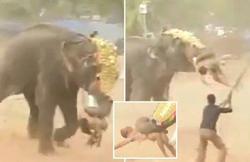 فیل خشمگین، فستیوال مذهبی در هند را به خاک و خون کشید +فیلم