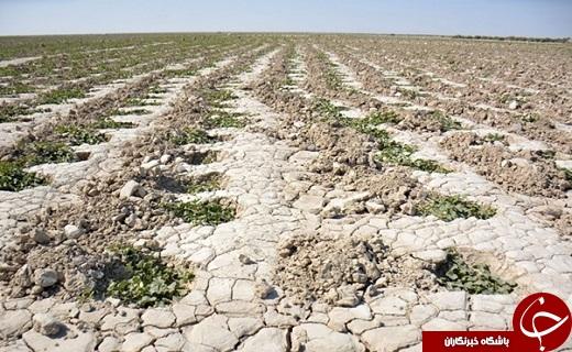 تداوم خشکسالی در سیستان پایان عمر هزاران ساله کشاورزی را رقم خواهد زد