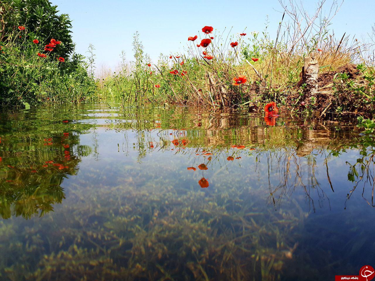 نمایی از طبیعت بهاری در لنگرود + تصاویر
