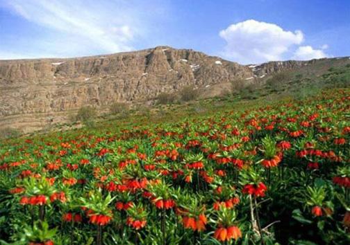 لاله واژگون گل افسانه ای ایران