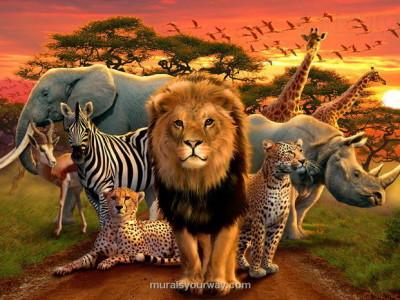 نکات جالبی درباره حیوانات/ از تغذیه ۲۵۰ کیلوگرمی فیلها تا خوابیدن ایستاده اسبها