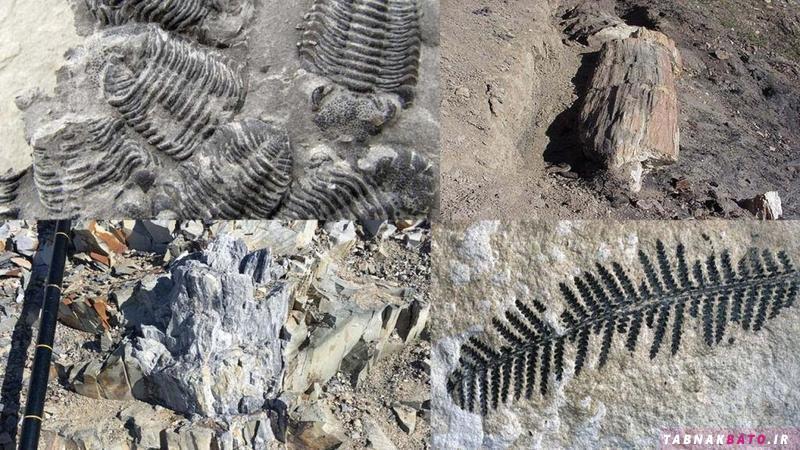 اکتشافات عجیب در مناطق منجمد زمین
